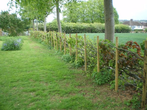 John's craftsmanship - a good hedge